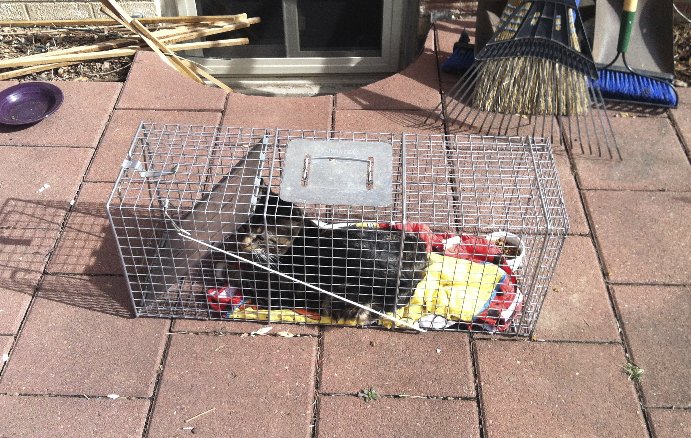 Using my Superpowers for Good Rescuing a Stray Cat – Jennifer